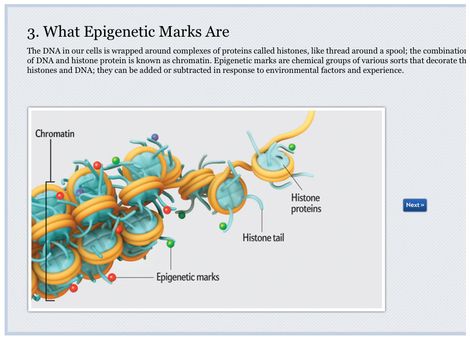 what is epigenetics Investigating the effects of the environment on the epigenetic regulation of biological processes and disease susceptibility is a goal in the niehs 2012-2017 strategic plan niehs is currently supporting epigenetics research that is accelerating the understanding of human biology and the role of the environment in disease.